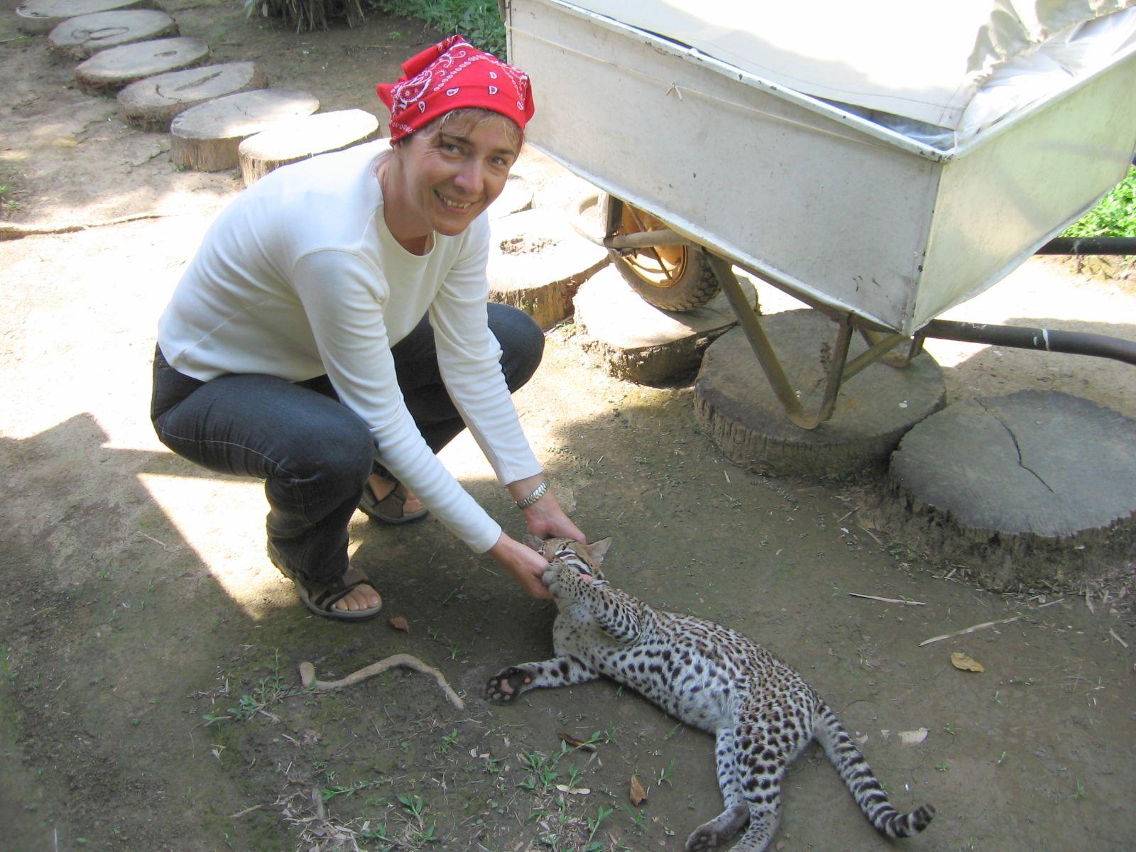 Peru - Madre de Dios. A lodge ocelot macskájával. Fotó: papp Éva