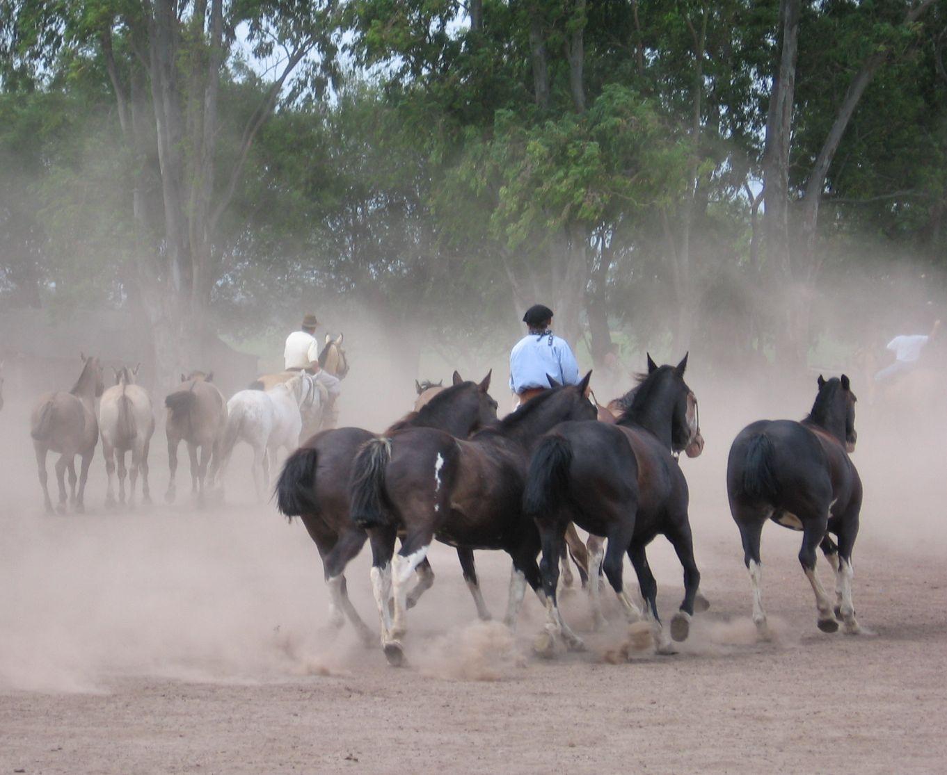 Argentína, gaucho-farm. Fotó: Papp Éva