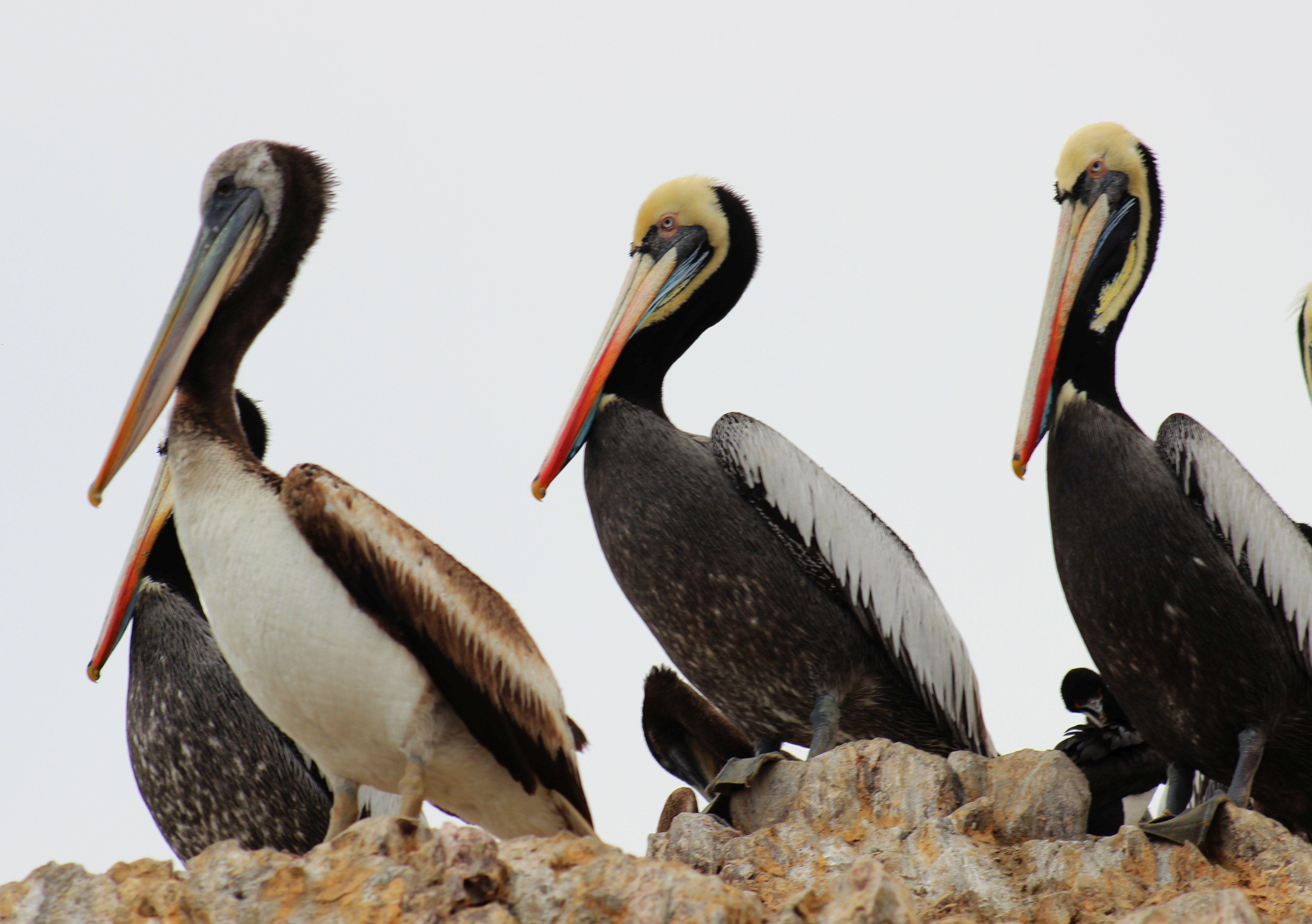 Peru - Ballestas-szigetek. Fotó: Papp Éva