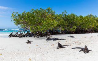 Kolumbia-Ecuador körutazás - Galápagos-szigetek