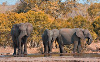 Dél-Afrika körutazás-Krüger NP