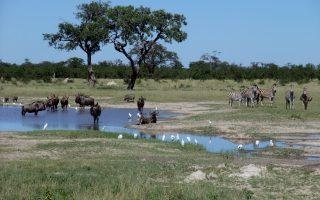 Dél-Afrika körutazás-Chobe NP