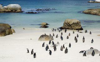 Dél-Afrika körutazás-Boulders-öböl