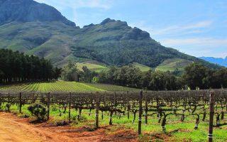 Dél-Afrika körutazás-Stellenbosch