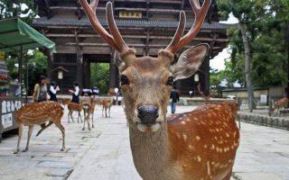 Japán körutazás -Nara