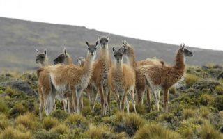 Dél-Amerika körutazás - Patagónia
