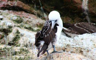 Dél-Amerika körutazás - Paracas