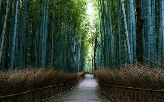 Japán körutazás -Kiotó