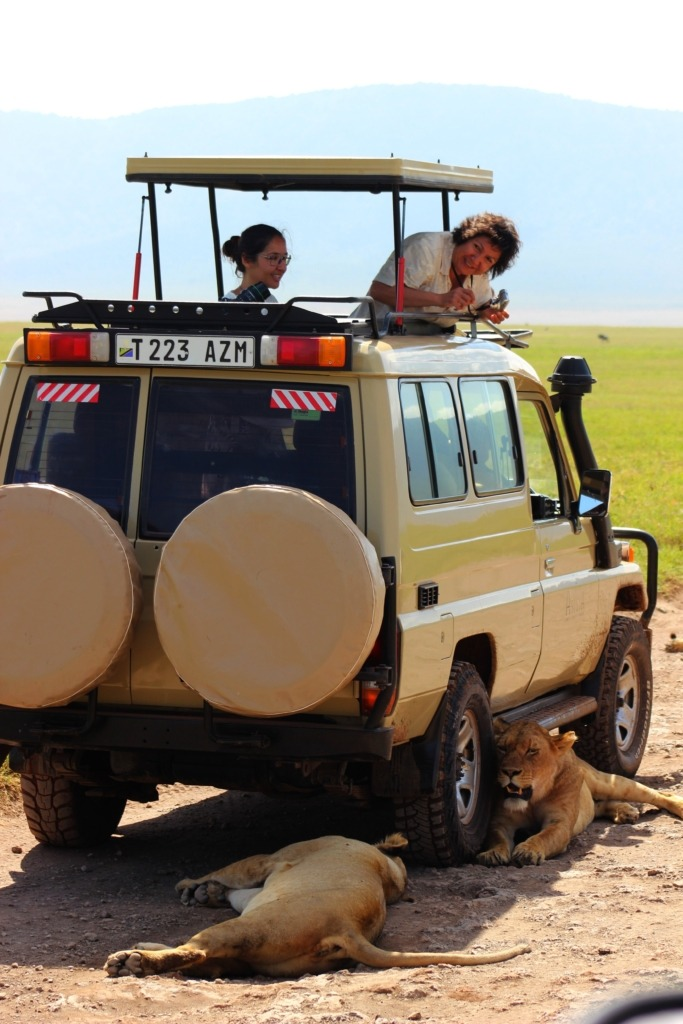 Ngorongoro-káter- Fotó: Papp Éva